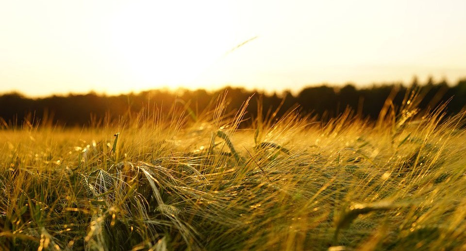 Agricultural Biotech Startups