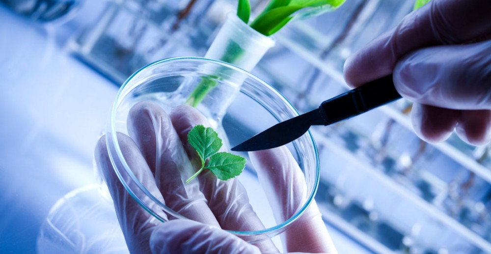 small biotech companies to invest in